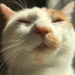 インスタグラムの猫のお祭りイケニャン祭り